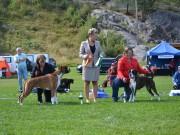 Norsk Boxerklubb Telemark sin spesialutstilling 28.08.2021 - Presentasjon av vinnere